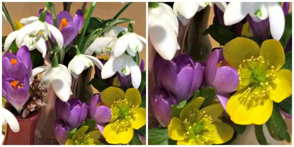 blomsterforår14